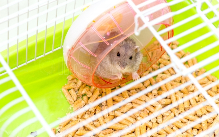 Cute hamster sitting in a cage and looking through the lattice cells