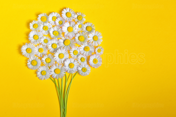 Daisy flower bouquet on yellow background