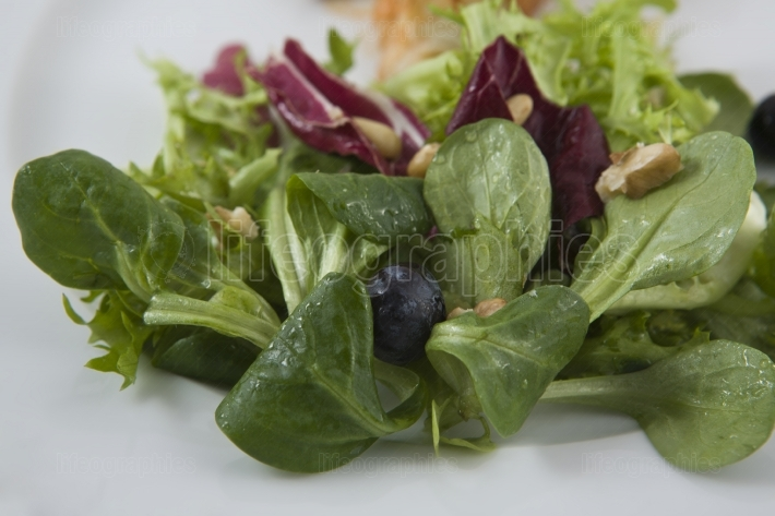 Detail of salad made of several types of lettuce