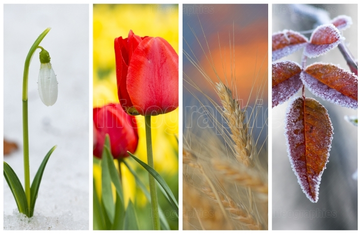 Different seasons of the year - several photos of beautiful nature. life cycle concept