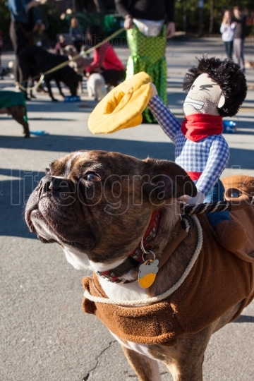 Dog Wears Cowboy Doll On Back At Eclectic Costume Parade