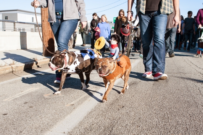 Dogs Wearing Costumes Walk In Eclectic Atlanta Parade