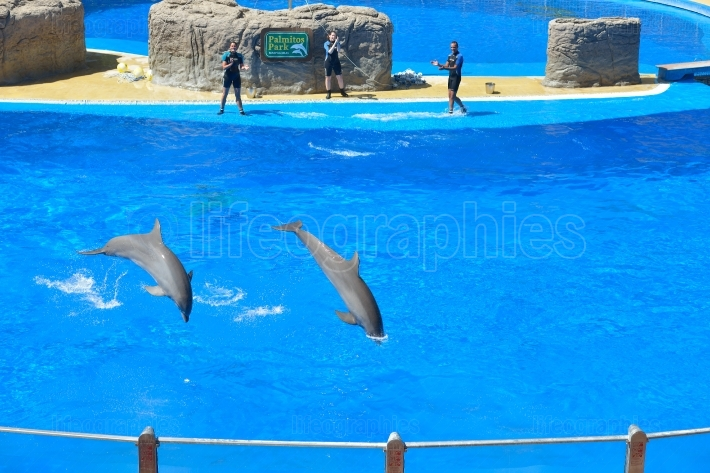 Dolphins show at Palmitos Park in Maspalomas, Gran Canaria, Spain