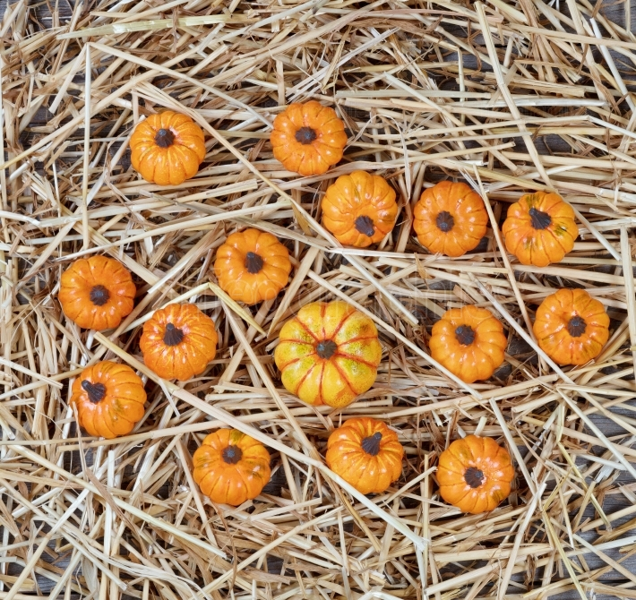 Dried straw and pumpkins on rustic wood for Autumn holiday backg