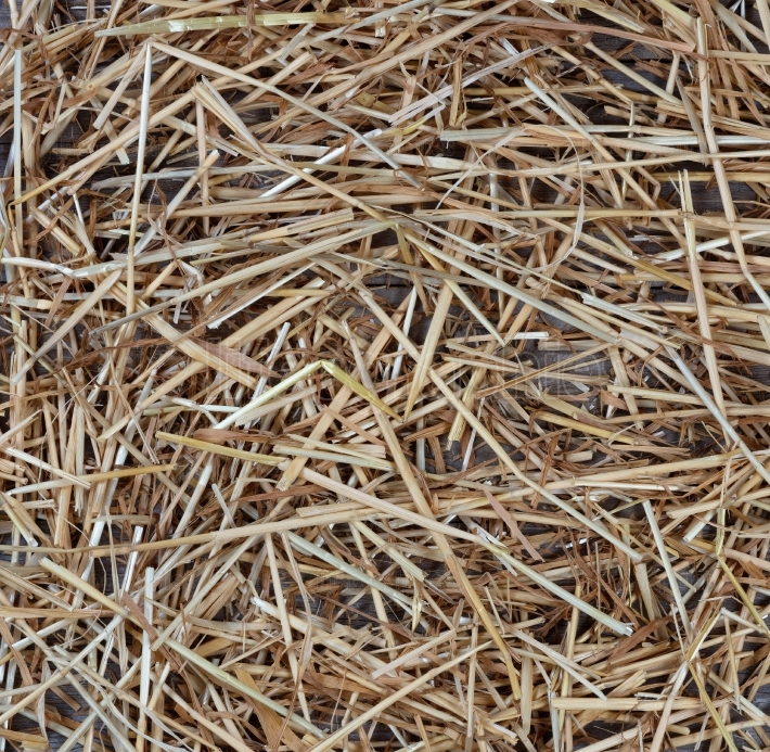 Dried straw on rustic wood for Autumn holiday background