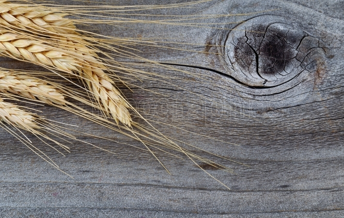 Dry golden wheat stalks on rustic wood