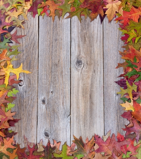 Early autumn leaves on rustic wooden boards