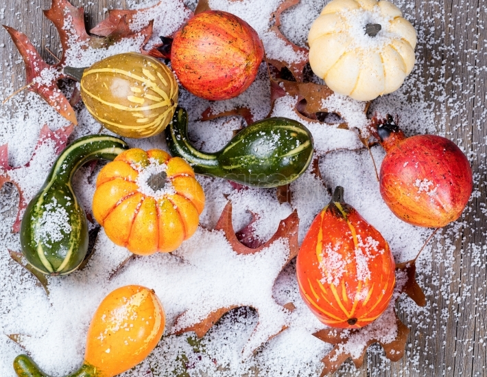 Early snow with autumn gourds and leaves on wood
