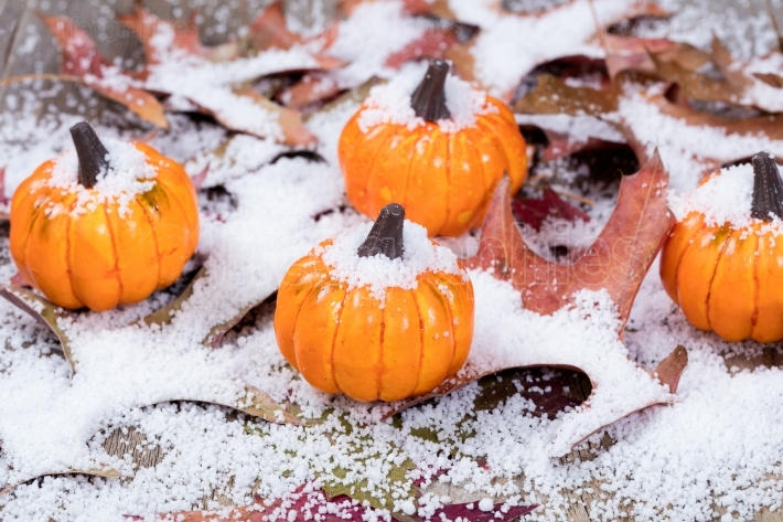 Early snow with autumn pumpkins and leaves on wood