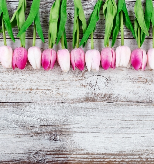 Easter upper border of Tulips on white rustic wooden background