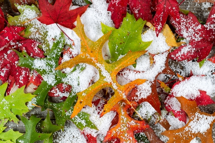 Fall Leaves and Snow