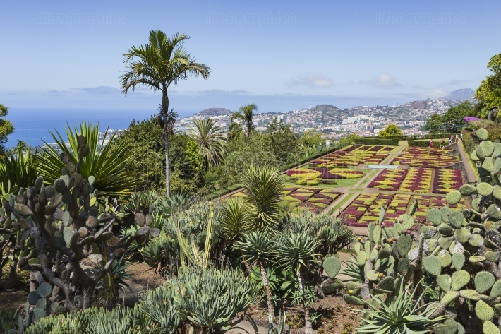Famous tropical botanical gardens in funchal town, madeira islan
