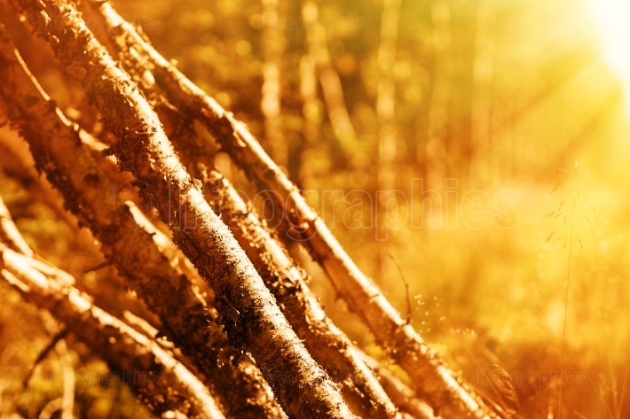 Felled birches with light leak bokeh background