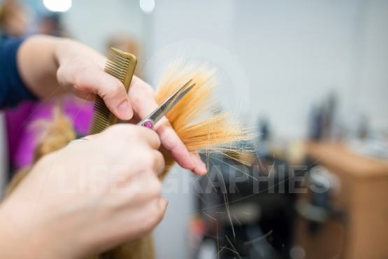Female hairdresser hold in hand between fingers lock of blonde