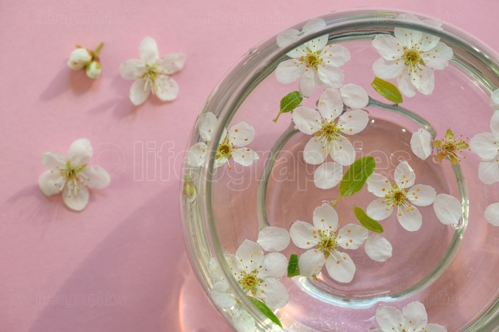 Flowers in bowl of water