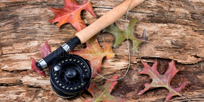 Fly fishing reel on dry old weathered tree and autumn leaves
