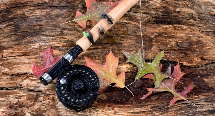 Fly fishing reel on wet old weathered tree and autumn leaves