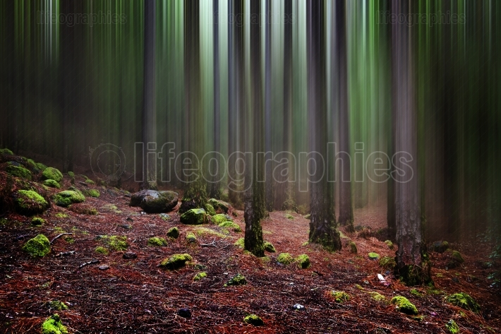 Foggy tropical forest in Anaga, Tenerife, Canary island, Spain
