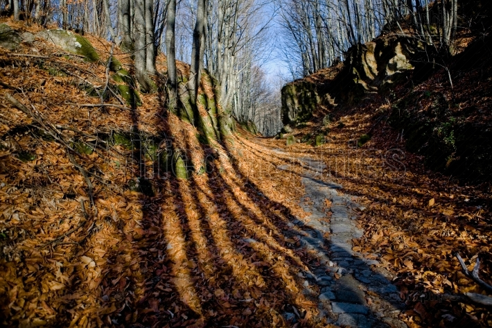 Forest long shadows
