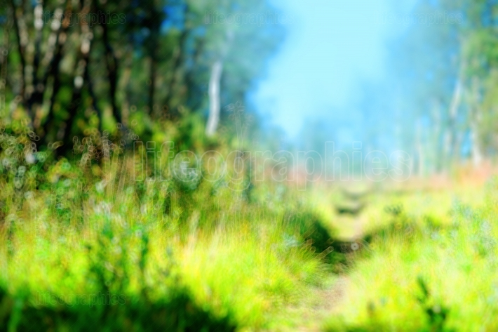 Forest path landscape bokeh background