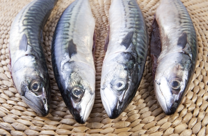 Four mackerels fish over rattan surface