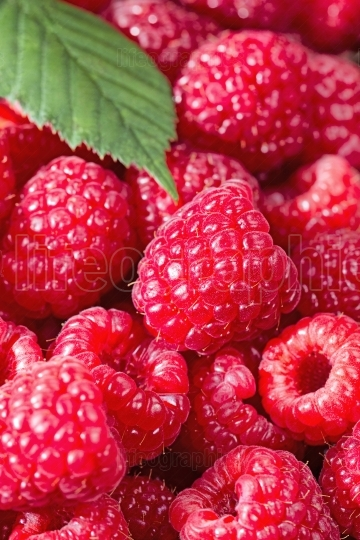 Fresh Raspberries up close