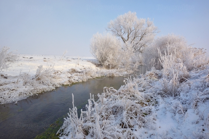 Frosty winter trees on countryside