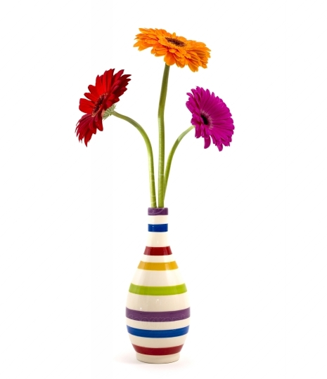Gerbera flowers in a vase isolated