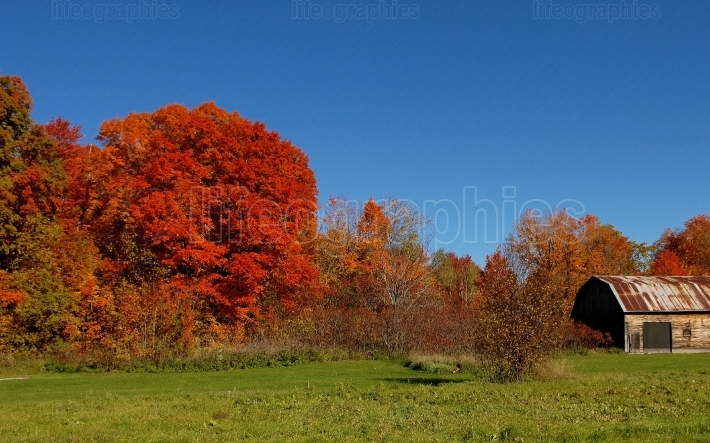 Gorgeous autumn trees under blue sky.