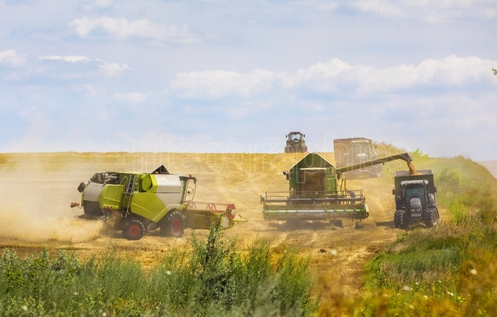 Grain harvesting combine in agricultural season