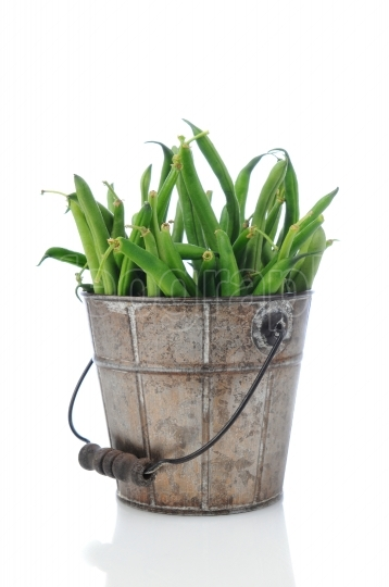 Green Bean in Rustic Bucket