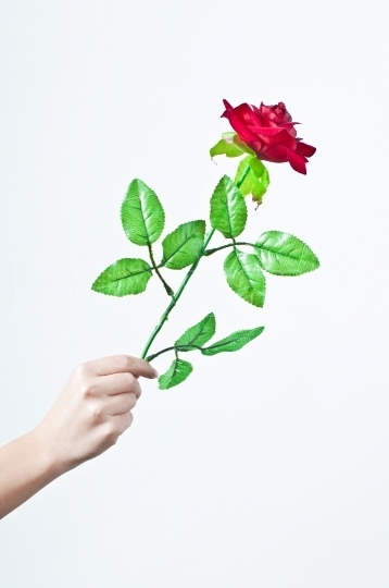 Hand offering rose