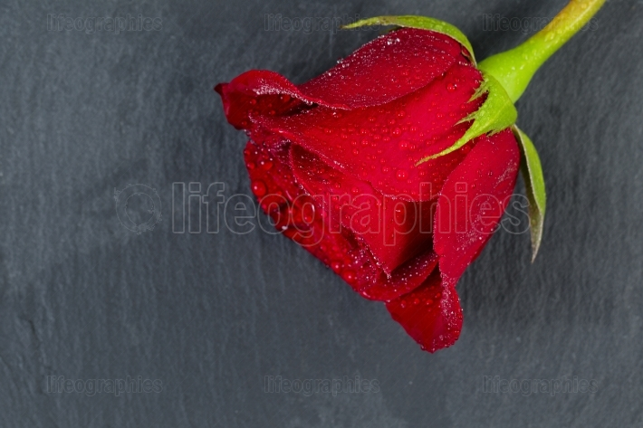 Happy Valentines day with single cut red rose on natural slate