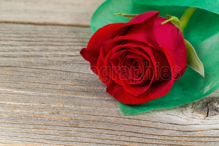Happy Valentines day with single freshly cut red rose on rustic