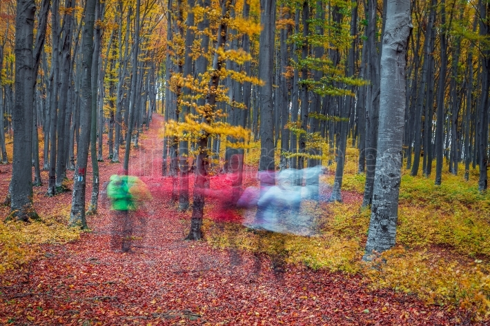 Hikers crossing the forest in autumn.Autumn in the forest with l