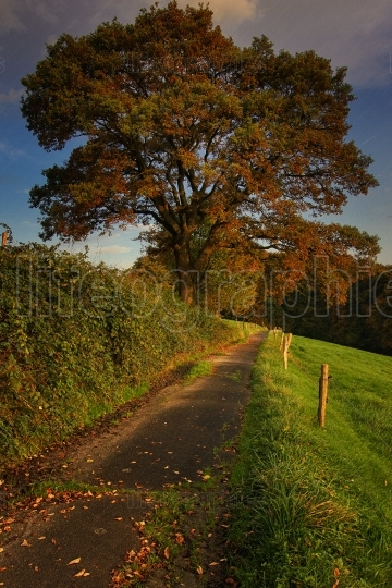 Hiking trail in morning sunlight, Odenthal, Germany