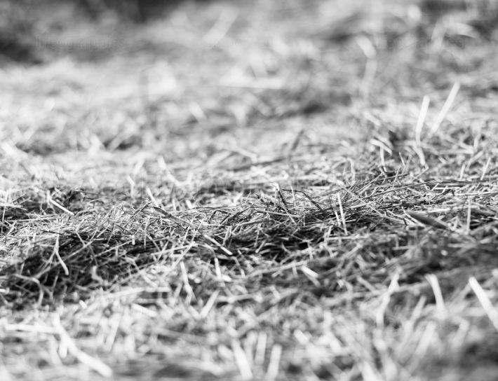 Horizontal black and white hay stable bokeh background backdrop