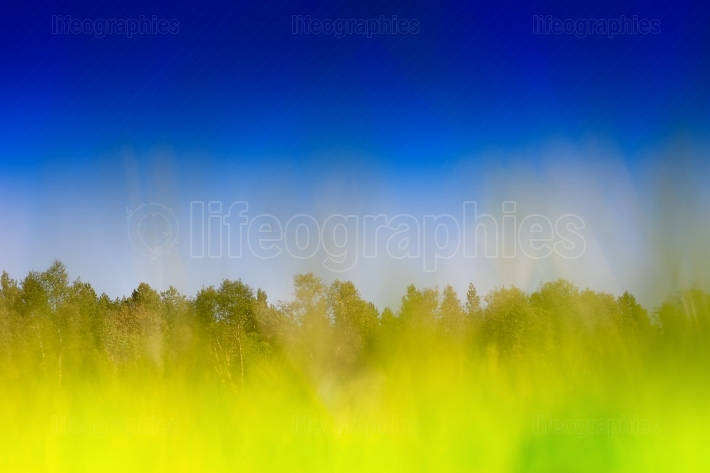 Horizontal grass on summer field bokeh background