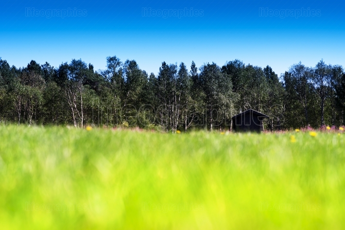 Horizontal grass on summer field with cottage bokeh background