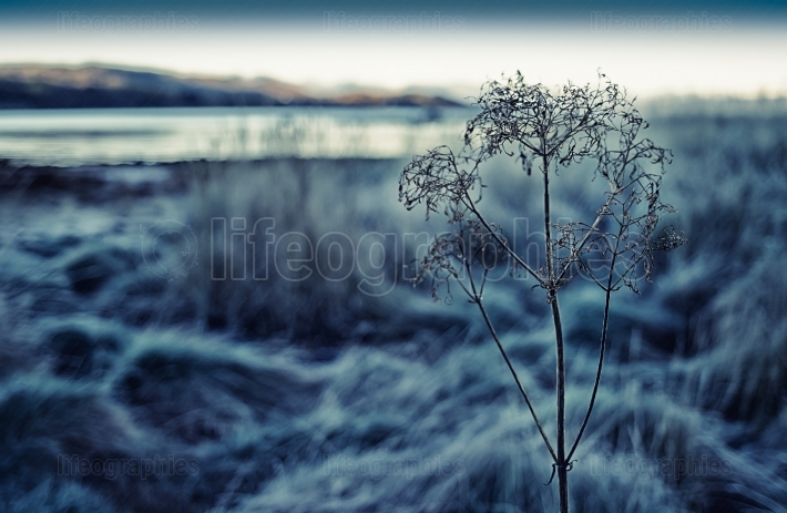 Horizontal right aligned Norway frozen plant bokeh backdrop