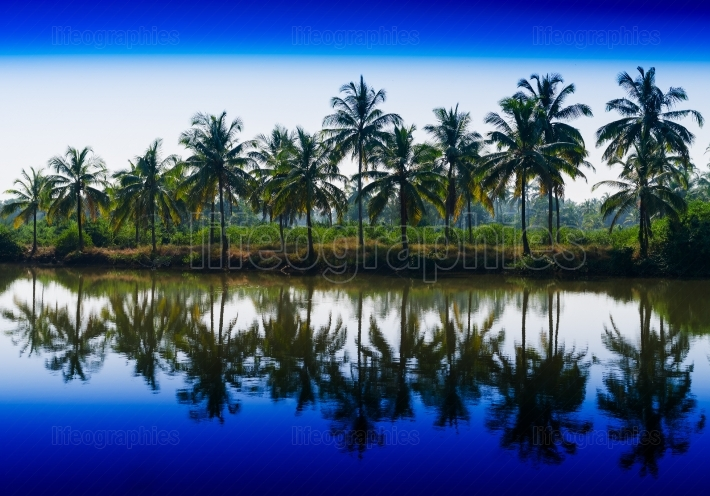 Horizontal vibrant dramatic palms in a row with reflections land
