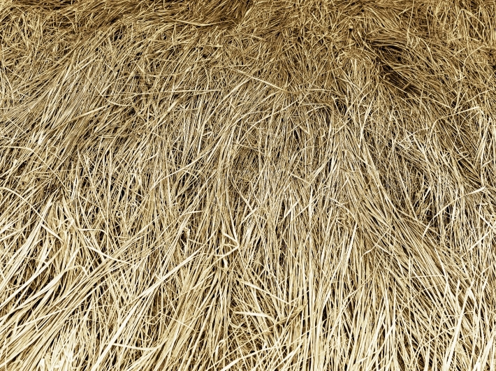 Horizontal yellow hay texture background backdrop