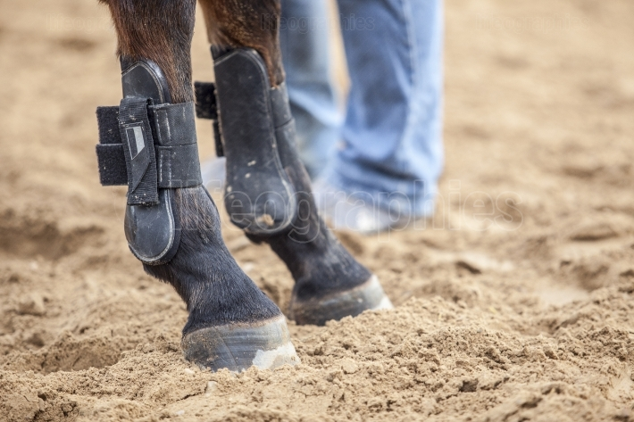Horse protections boots for legs at jumping competition training