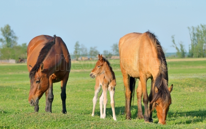 Horses family in spring time