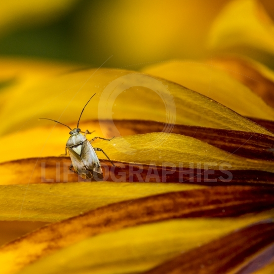 Insect on the leaf