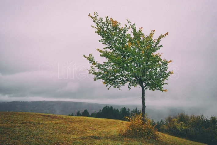 Isolated tree in top of the hill
