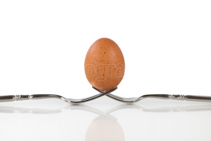 Isolated whole brown egg balanced on two forks