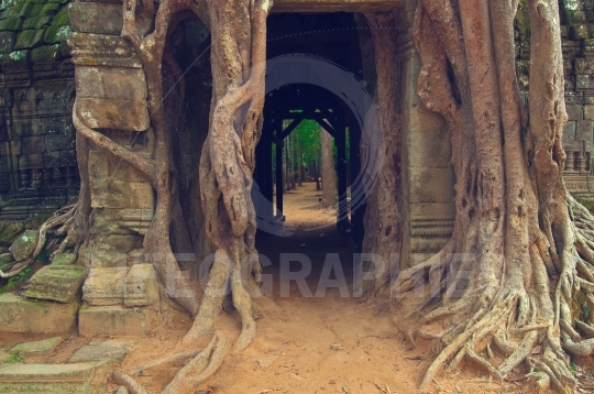 Jungle city angkor wat temple ruins cambodia
