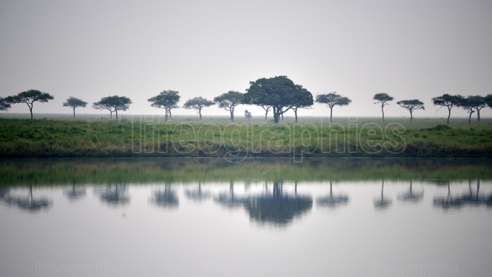 Lake in savanna plain with acacia trees and several birds on ban