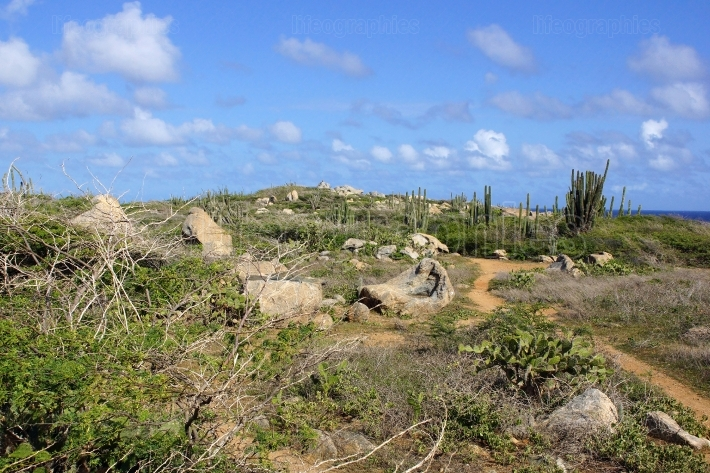 Landscape of Aruba, ABC Islands